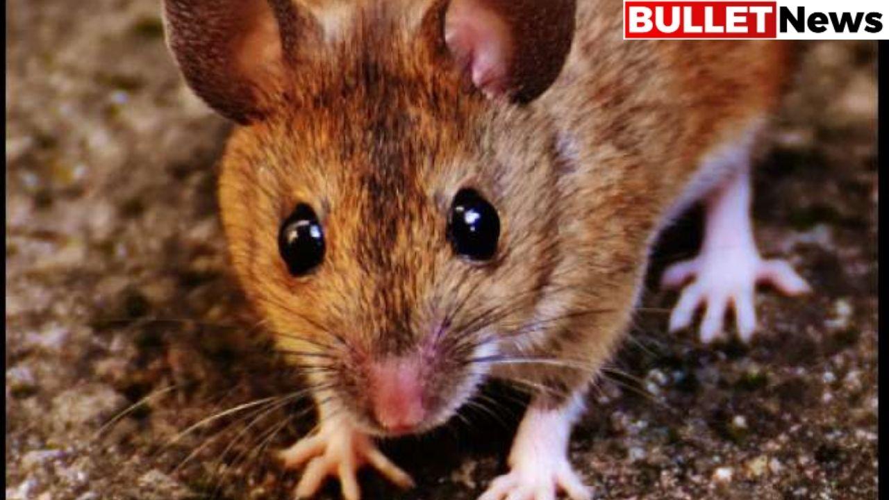 Australia under plague attack